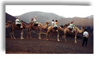 Camel Safari, Canary Islands